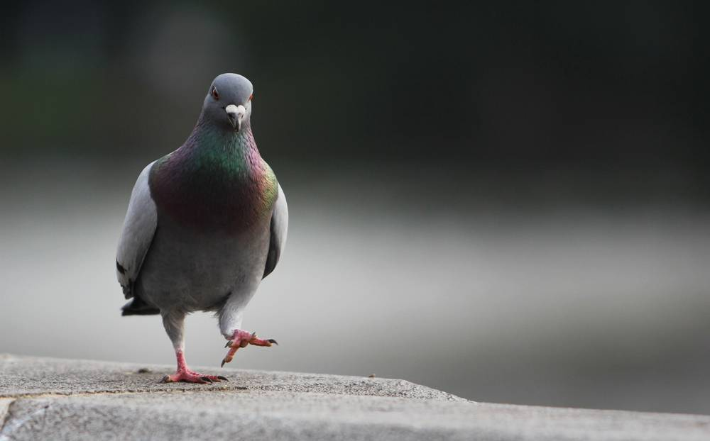 Pigeon Google Filter