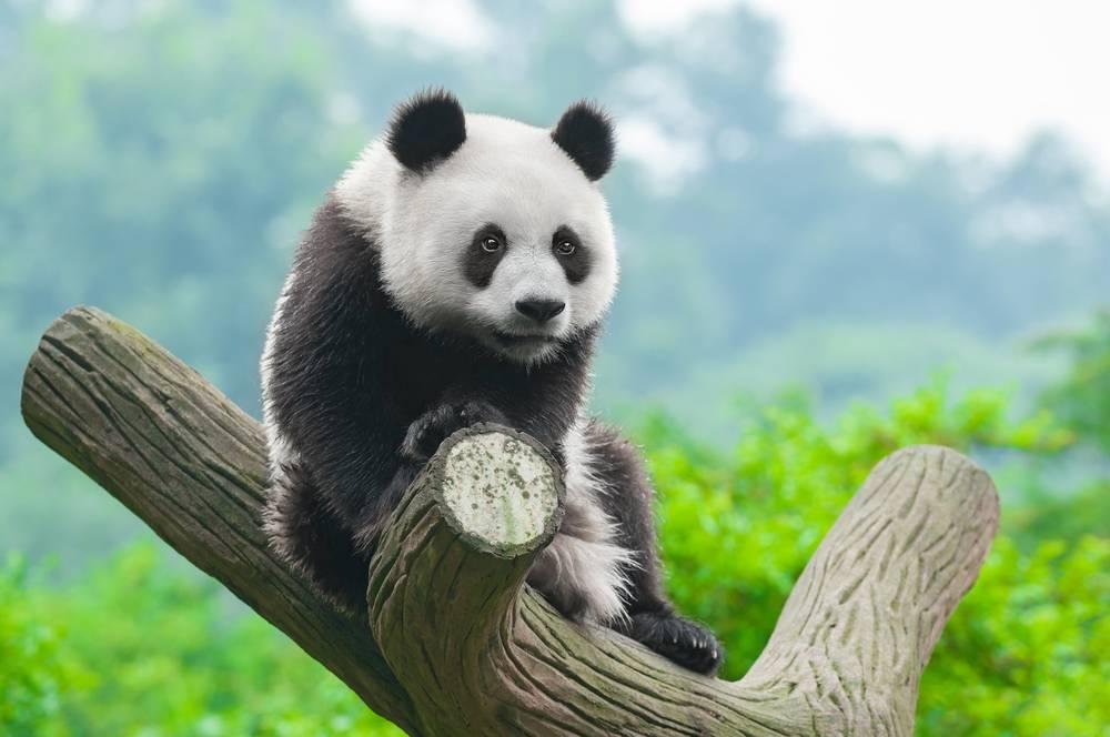 Panda Google Filter