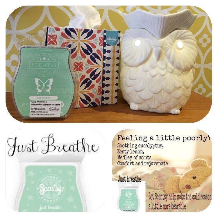 scentsy winter pack Ailsa Wilkinson