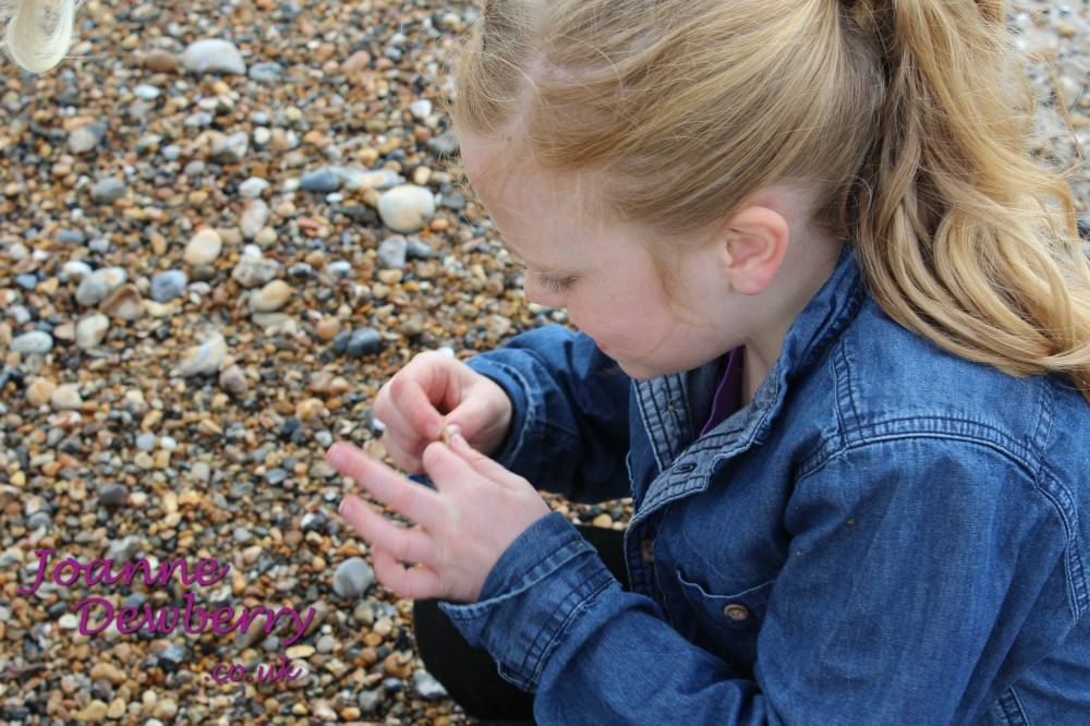 shell collecting wellbeing happiness
