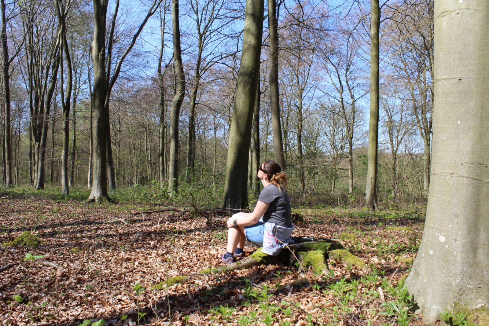 sit spot forest bathing