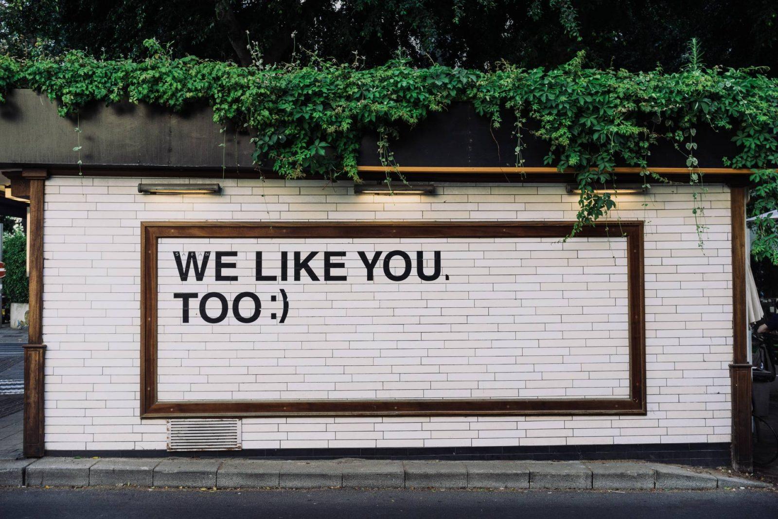 build your social media following
